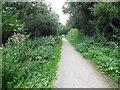 TQ2016 : Downs Link Path near Henfield by Paul Gillett