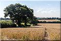 TQ3097 : Farmland, Trent Park, Cockfosters, Hertfordshire by Christine Matthews