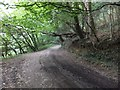 SX4765 : Track in Whittacliffe Wood by David Smith