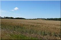 NU2422 : Farmland near Dunstan Steads by DS Pugh