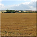 TL5253 : Over stubble towards Lower Valley Farm by John Sutton