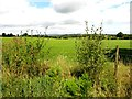 H1610 : Carrickmakeegan Townland by Kenneth  Allen