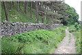 SE0151 : Skipton Moor Lane beside coniferous wood by Roger Templeman