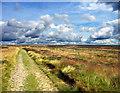SE8393 : Levisham Moor by Scott Robinson