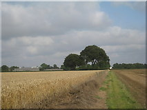 SE9532 : Approaching Weedley and Riplingham by Jonathan Thacker