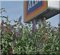 NT9954 : Butterflies on buddleia at Aldi by Barbara Carr