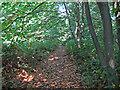 TM1621 : Path in Weeleyhall Wood by Roger Jones
