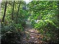 TM1620 : Path in Weeleyhall Wood by Roger Jones