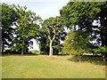 TQ0752 : Trees near Upper Hammond's Farm by Paul Gillett