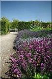 TL8425 : Purple Patch in the Walled Garden by Glyn Baker