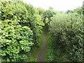 NY9623 : Tees Rail Walk at Mickleton by Oliver Dixon