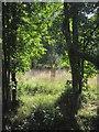 SS6618 : Meadow by the Mole by Derek Harper