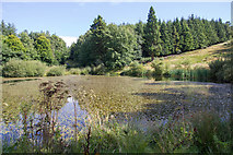 NZ1858 : The Octagon Pond, Gibside by David P Howard