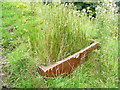 SE0126 : Rushes growing in an old sink by Humphrey Bolton