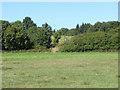 SU8162 : Fields, Grove Farm by Alan Hunt