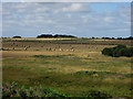NU2423 : Looking inland from Embleton Links by Graham Robson