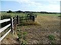 TG5007 : Field boundary, north of Humberstone Farm by Christine Johnstone