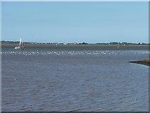 TG4907 : Wading birds, Breydon Water by Christine Johnstone