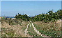 SU5482 : Byway on Lowbury Hill (2) by Stephen Richards