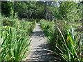 SZ0791 : Boardwalk in Upper Garden by Paul Gillett