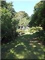 SS2424 : Path through the gardens of Hartland Abbey by David Smith