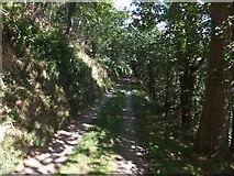 SS2325 : Track beside Abbey River, Hartland Abbey (1) by David Smith