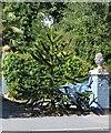 TQ7327 : Monkey Puzzle Tree, Hurst Green by Julian P Guffogg