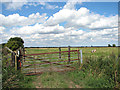 TM4596 : Gate into marsh pasture, Haddiscoe by Evelyn Simak