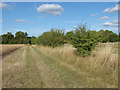 SU9549 : Field boundary by Alan Hunt