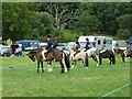 SJ1901 : Berriew Show - a smart line-up of ponies and their young riders by Penny Mayes