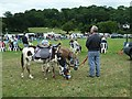 SJ1901 : Donkeys at Berriew Show by Penny Mayes