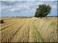 NU2323 : Boundary of an arable field, near Embleton by Graham Robson