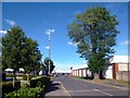 SU9481 : Tree on the Trading Estate by Des Blenkinsopp