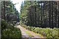 NH9819 : A track in Abernethy Forest by Jim Barton