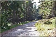 NH9317 : Forest track near Boat of Garten by Jim Barton