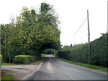N7379 : Arching tree over the R164 at Oakley Park, south of Moynalty by Eric Jones