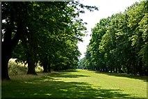 NZ1758 : The Avenue, Gibside by Paul Buckingham