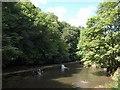 ST6175 : Weir on the River Frome by Derek Harper
