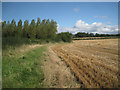 SP1370 : Poplars and wheat stubble south of Umberslade by Robin Stott