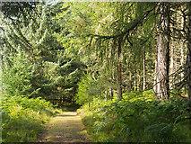 NH6271 : Excellent path in the Novar Estate by Julian Paren
