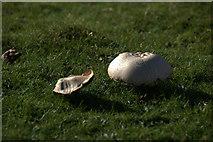 HP5713 : Field Mushrooms (Agaricus campestris) above Retta Geo, near Orknagable by Mike Pennington