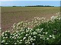 TF5623 : Farmland at New Marsh by Mat Fascione