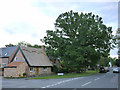 SK6013 : Cossington Coronation Oak, George V and Thatched Cottage by Alan Murray-Rust
