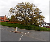 SO7845 : Tree at the edge of Barnard's Green, Malvern by Jaggery
