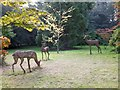 SS9700 : Statues of deer in the shelter belt of Killerton Garden by David Smith