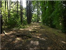 NS3977 : Path through the woods by Lairich Rig