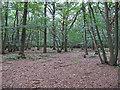 TL6301 : Stoneymore Wood, Writtle Forest by Roger Jones