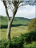 SN8056 : Cwm Tywi north of Dolgoch, Ceredigion by Roger  Kidd