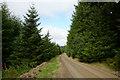 SH9629 : Forestry road in Penllyn Forest by Trevor Littlewood