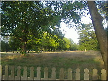 TQ1773 : Lawn in front of Ham House by David Howard